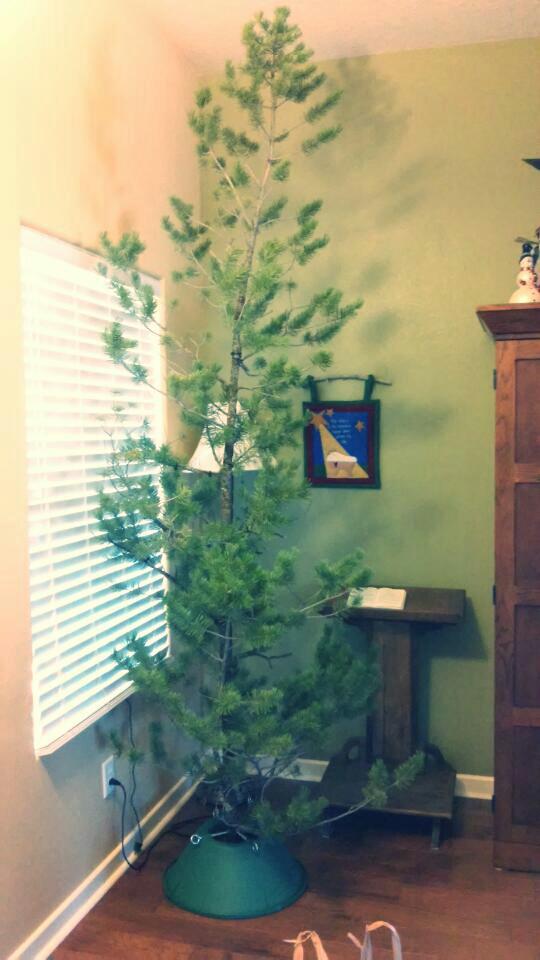 2014 11 29_131431 - Ugly Christmas Trees